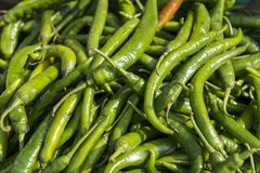Close up of green chili pepper Stock Photography