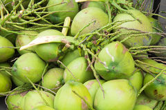 Close up green coconuts Stock Photography