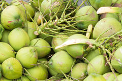 Close up green coconuts Stock Photos