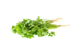 Close up green coriander isolated on white Royalty Free Stock Images