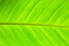 Green leaf background Royalty Free Stock Photography