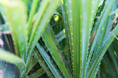 Close up of green exotic plant outdoors Royalty Free Stock Photo