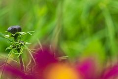 close up of the green flower in early autumn. royalty free stock photography