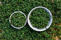 Close-up  green fresh  Salae (Broussonetia kurreii Corner) in ba Royalty Free Stock Image