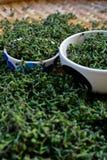Close-up  green fresh  Salae (Broussonetia kurreii Corner) in ba Stock Images