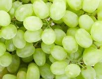 Close up of green grapes Stock Image