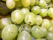 Close up of green grapes Stock Images