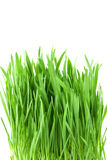 Close-up green grass Royalty Free Stock Photo