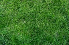 Close-up green grass Stock Photography