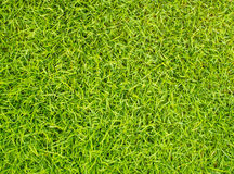Close up green grass background Stock Photography