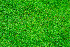 Close up green grass background Stock Photo