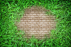 Close up of green grass background texture Stock Image