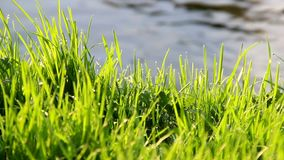Grass at the river bank. Close-up green grass at the bank of small fast river stock video