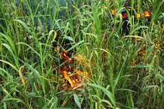 Close up of green grass burning at summer Royalty Free Stock Photos