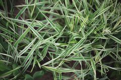 Close-up of green grass bush on a flowerbed in the park stock photography