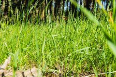 Green grass in the park royalty free stock photo