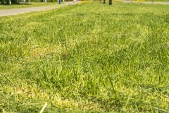 Green grass in the park royalty free stock photos