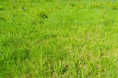 Green grass in the park royalty free stock photography