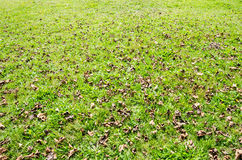 Close up on green grass with fallen brown leaves. Stock Photos