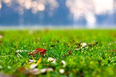 Close up of green grass, fallen leaves and a cold forest background stock photos
