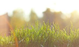 Close up green grass field with blur park background,Spring and summer concept,vintage filter.Beautiful nature.Copy space royalty free stock photography