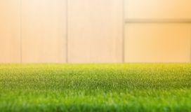 Close up green grass field with blur wall background.Spring and summer concept,.Beautiful nature, sunshine time.Copy space royalty free stock images