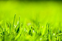 Close up of green grass with focus point. Stock Photos