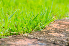 Close up green grass grown Stock Images