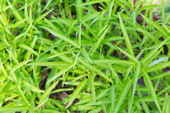 Close up of green grass or herb outdoors Stock Photo