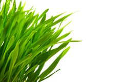 Green grass isolated on white with copy space Royalty Free Stock Images