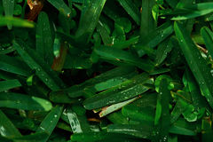 Close up of green grass pattern Stock Photography