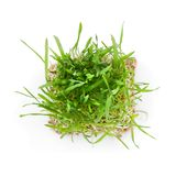 Close-up green grass with roots. Isolated on white Stock Photos