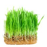 Close-up green grass with roots isolated. On white Stock Photos