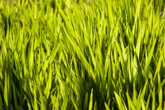 Close up of green grass Stock Photography