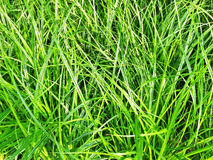 Close-up of green grass in sunlight Stock Images