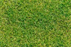 Close up of green grass for your background Royalty Free Stock Photography