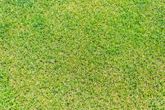 Close up of green grass for your background Stock Photography