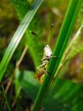 Green grasshopper on a blade of grass stock photos