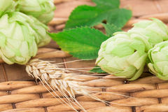Close up of green hops and wheat ears. Royalty Free Stock Photography