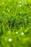 Close-up green lawn, fresh and wet. royalty free stock photography