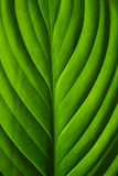 Close-up of Green Leaf Stock Photos
