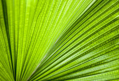 Close-up Green leaf Stock Image