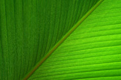 Close up Green leaf abstract nature  background Royalty Free Stock Photography