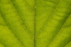 Close up Green leaf detail abstract texture background Stock Images