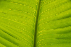 Close up green leaf detail nature texture and background Royalty Free Stock Photos