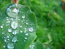 July, Wet With Dew royalty free stock photo