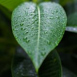 Close-up Green leaf with light background royalty free stock photos