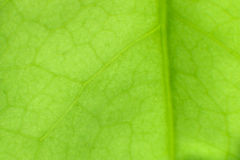 Close up green leaf Stock Image