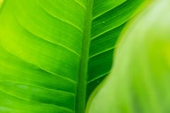 Green leaf background with rain drops. Close-up Green leaf and natural background royalty free stock photography