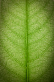 Close up of green leaf. Texture Stock Images